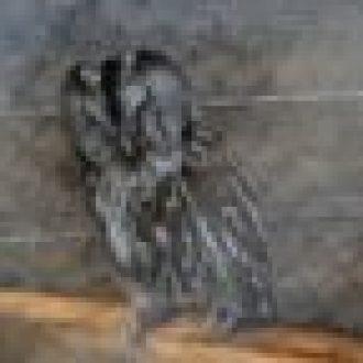 niewidoma-sowa-paczus